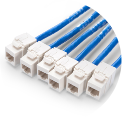 Cat6 Trunk Cables UTP Jack Termination