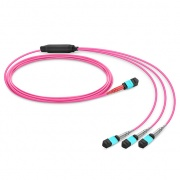 Customized MTP® 24 Fibers OM4 Multimode Conversion Harness Cable